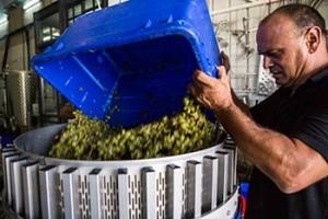 wine tour israel Salokiya Winery